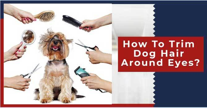 How to trim dog hair around eyes