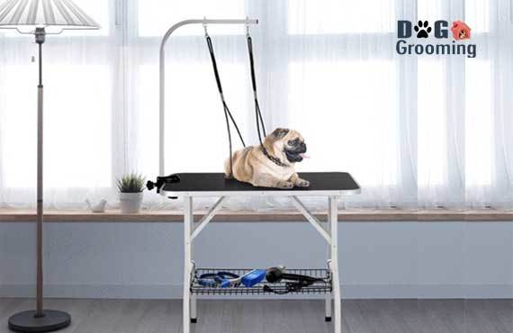 Best dog grooming table for at home use