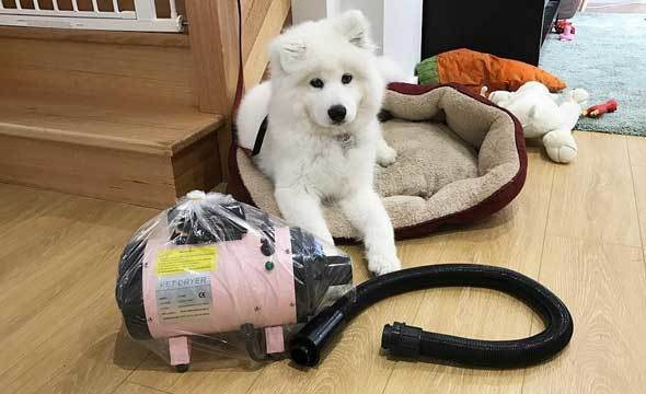 Best Dog Blow Dryer For Home Use