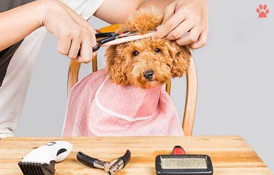What age should a puppy be groomed