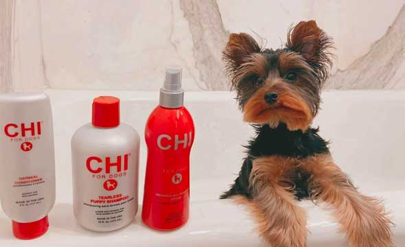 What Is The Best Shampoo For A Puppy