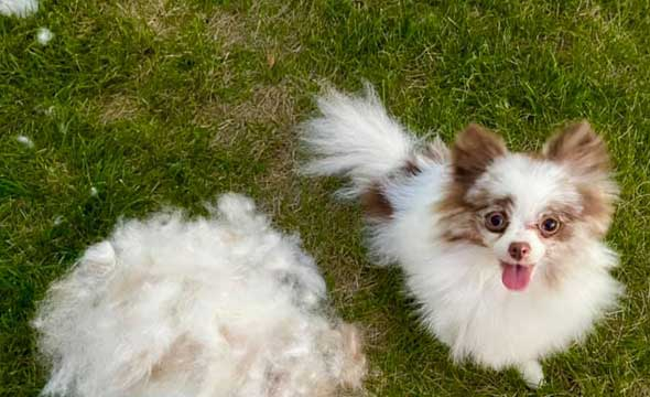 Best Shampoo for Dogs That Shed