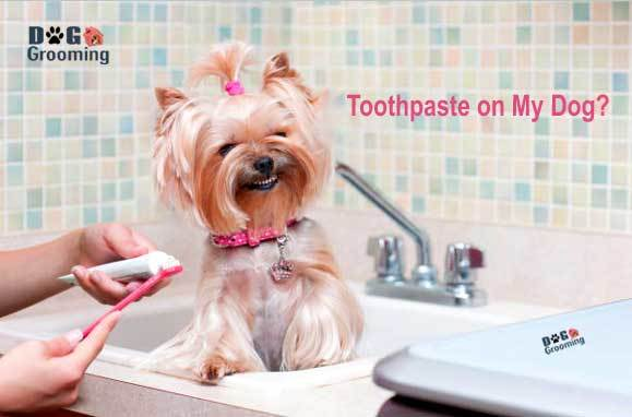 Can I Use Regular Toothpaste on My Dog